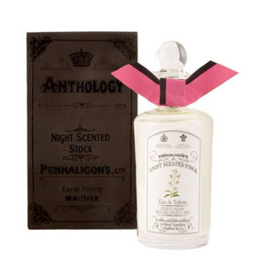 Night Scented Stock